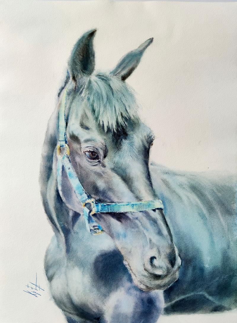 портрет черного коня акварель