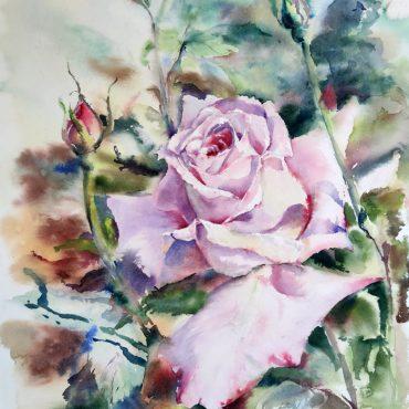 картина акварель роза